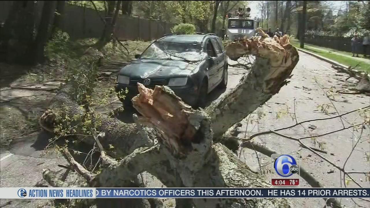 VIDEO: Couple escapes injury after tree falls on SUV in Mt. Airy