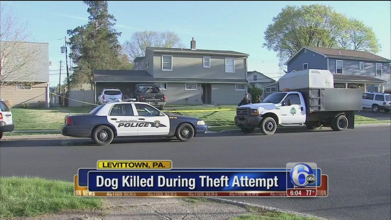 VIDEO: Dog killed during theft attempt