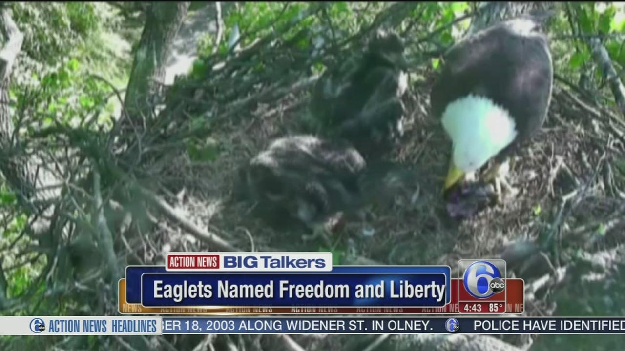 VIDEO: Eaglets born in DC named