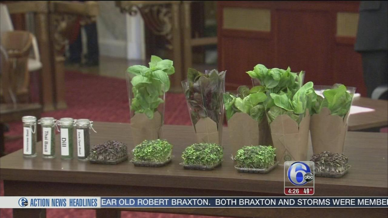 The future of vertical farming in Philadelphia