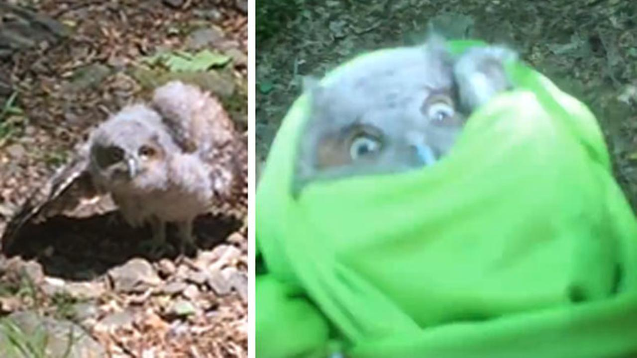 MUST SEE VIDEO: Philadelphia forecaster rescues baby owl