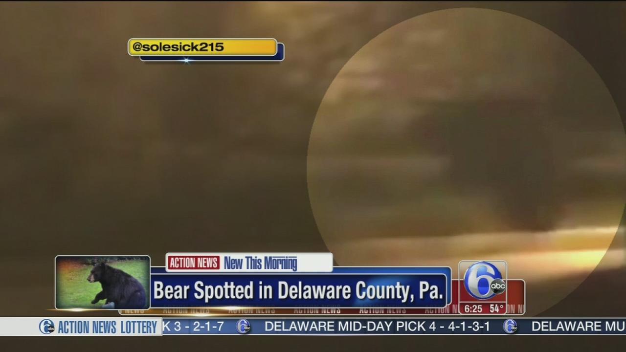 VIDEO: Bear caught on camera in Delco