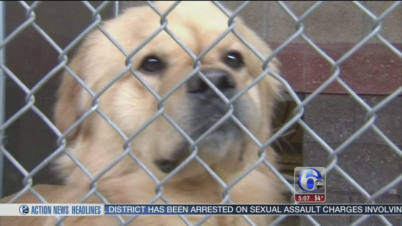 VIDEO: Dogs rescued from overseas meat market