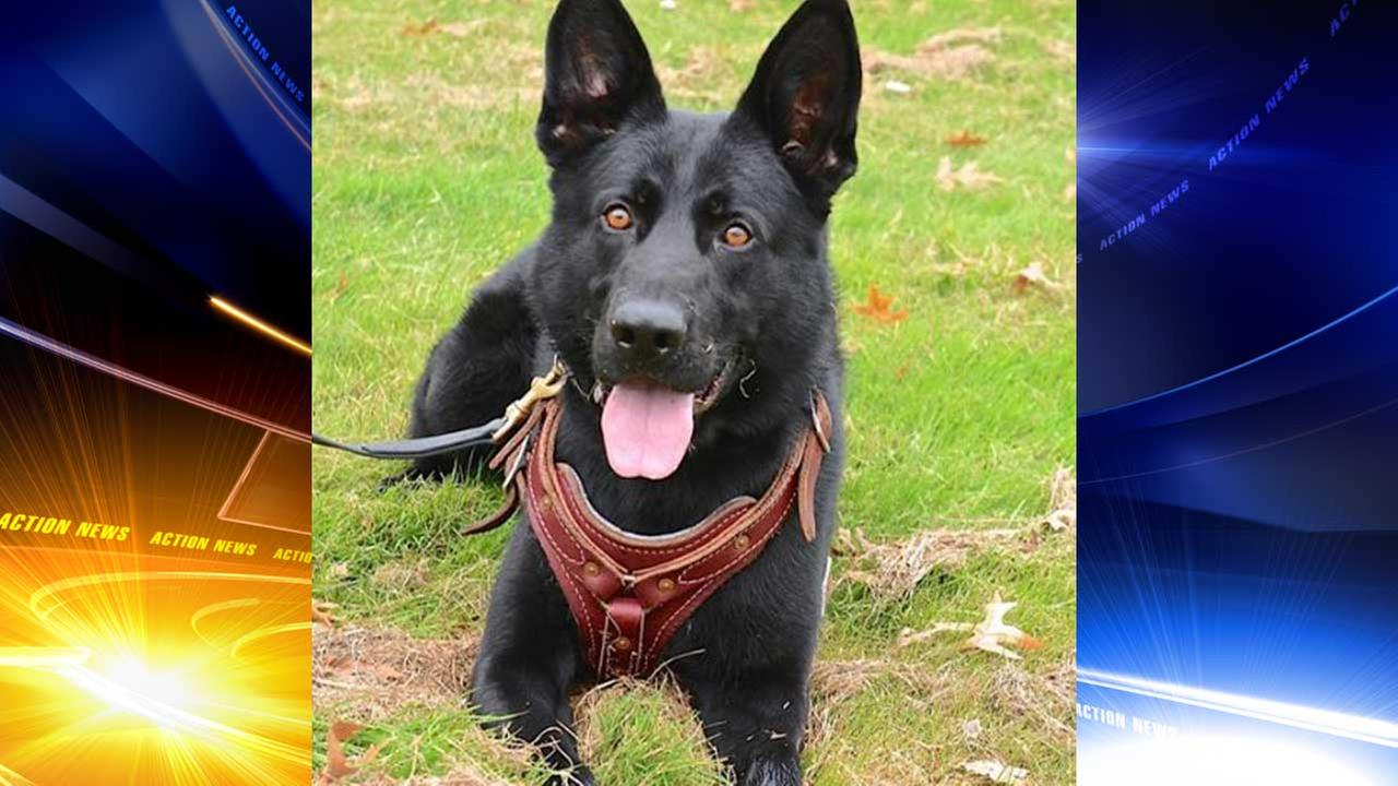 An 11-year-old boy in New Castle, Delaware has been found safe thanks to the work of a police K9 named Ax.