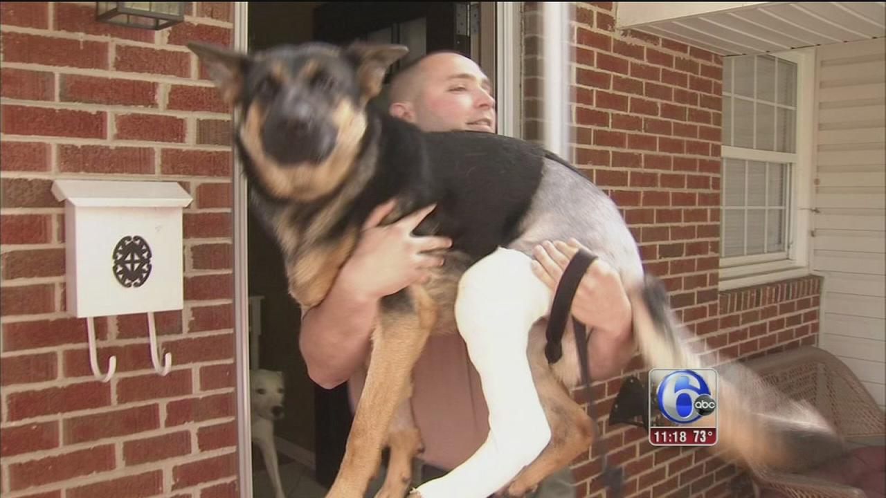 VIDEO: K-9 special report