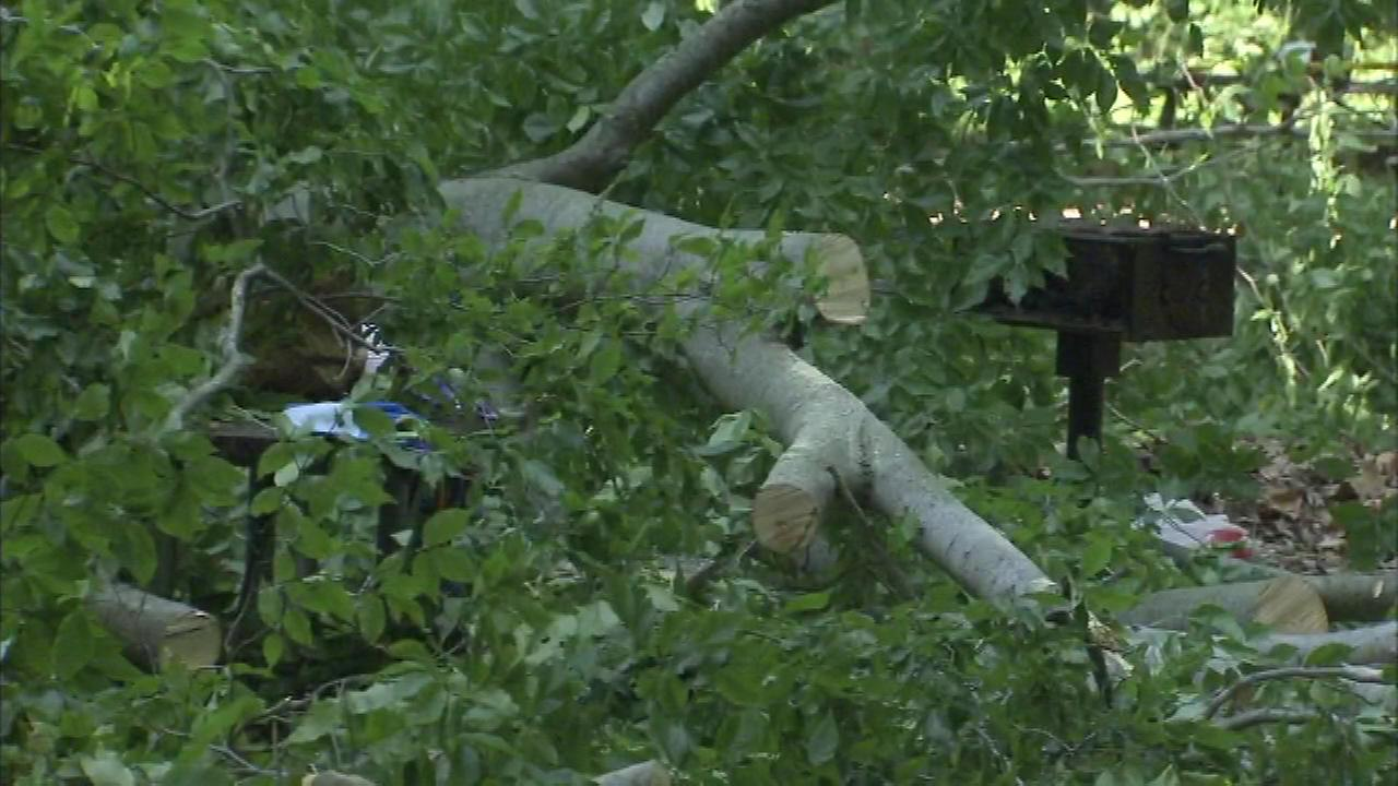 A father and son were rescued after a tree branch fell on them at Neshaminy State Park.