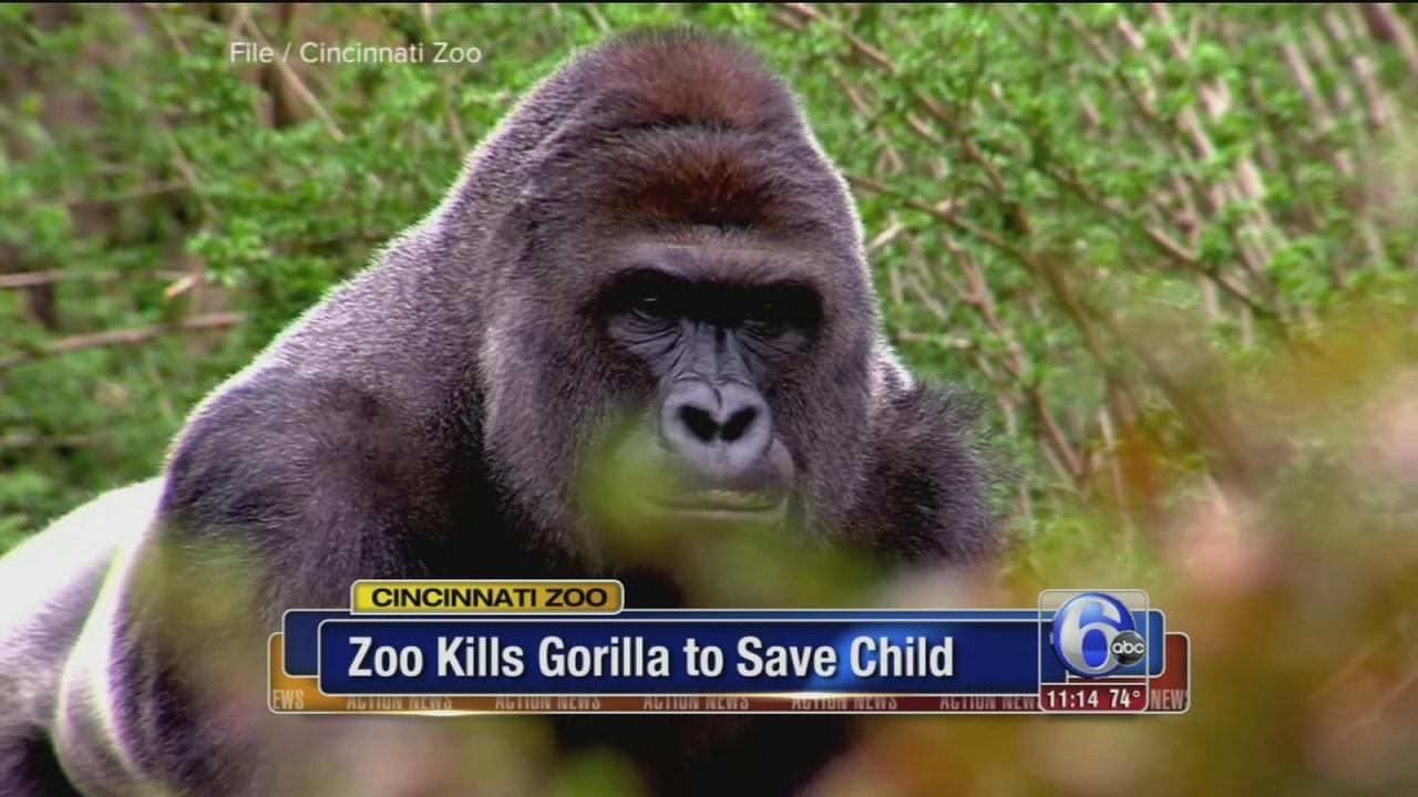 VIDEO: Cinn Zoo