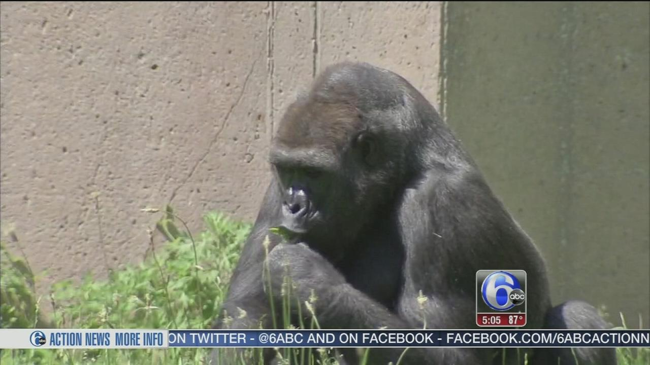 VIDEO: Philadelphia Zoo says security an ?ongoing process?