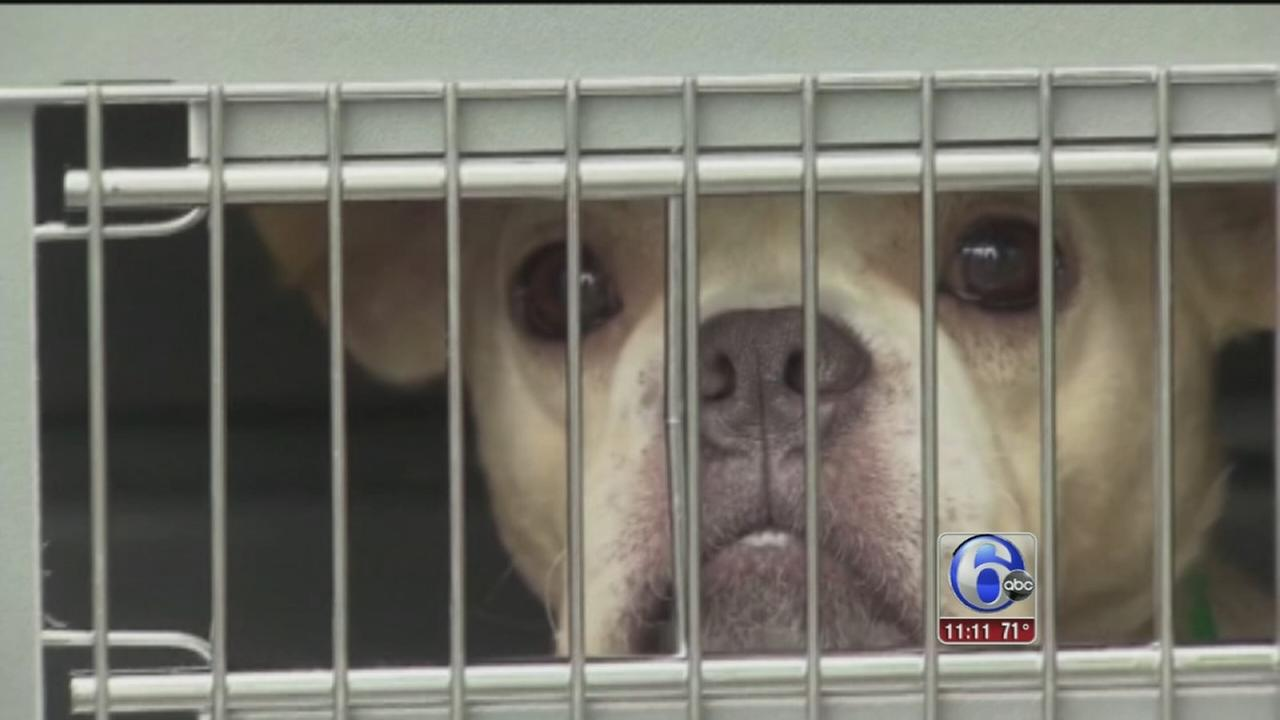VIDEO: Dog hoarder rescue