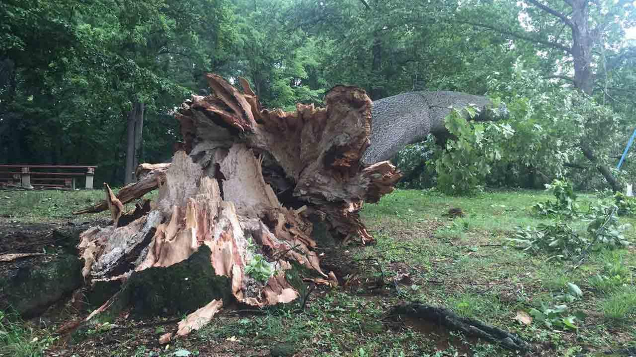 Action News viewer Maureen Garrity sent in this photo of a massive tree down in Haddon Heights, N.J. at the park next to The Dell.