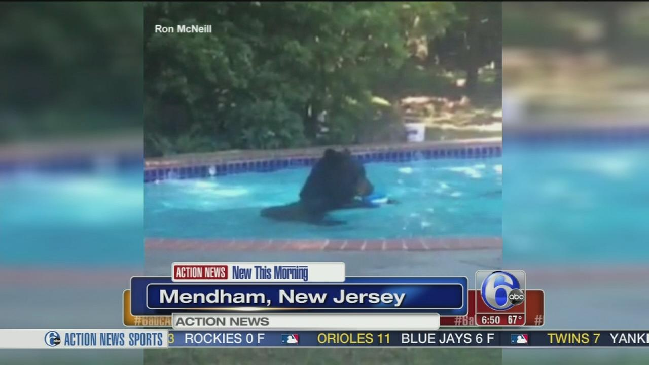 Bear goes for a dip in new jersey family 39 s backyard swimming pool for Bears in swimming pool new jersey