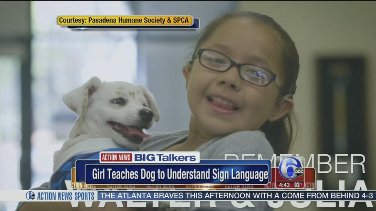 VIDEO: Deaf girl teaches deaf dog sign language