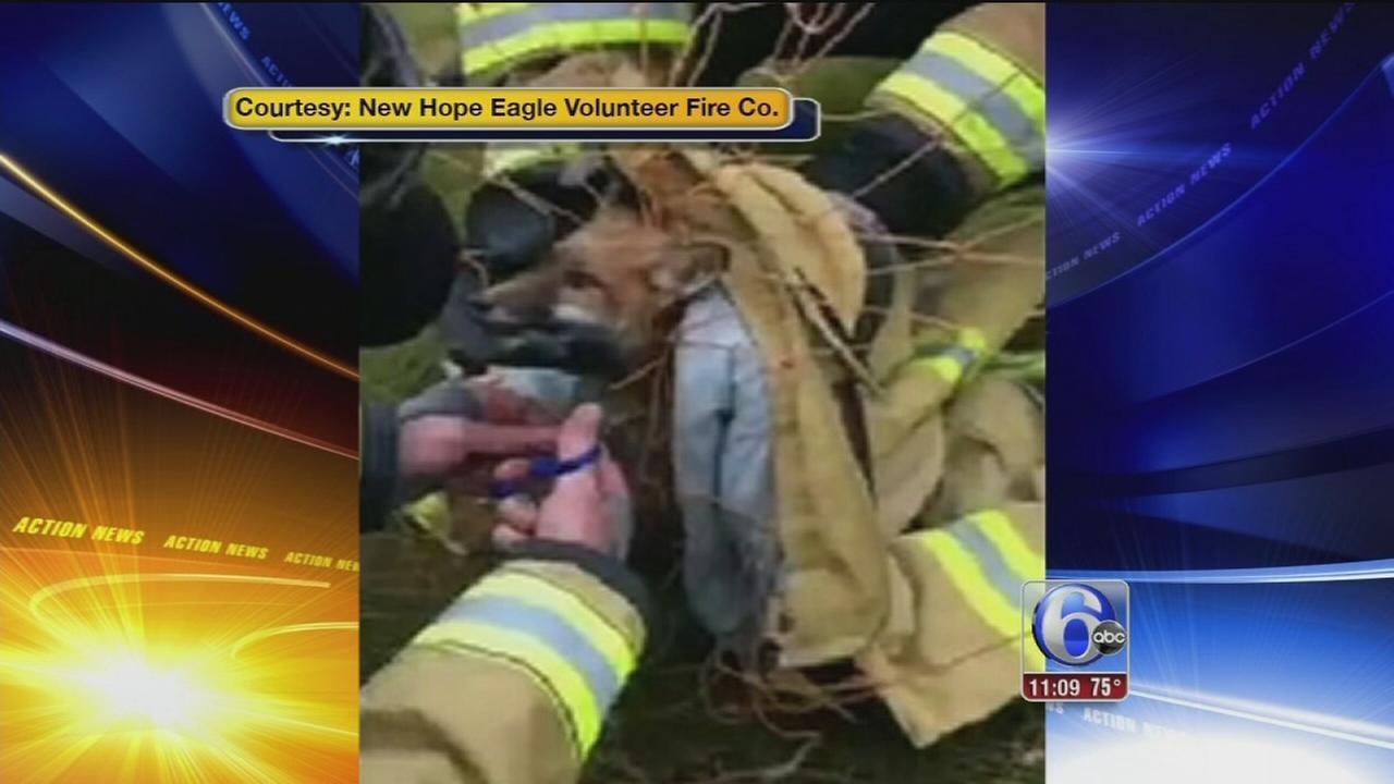 VIDEO: Fox rescue