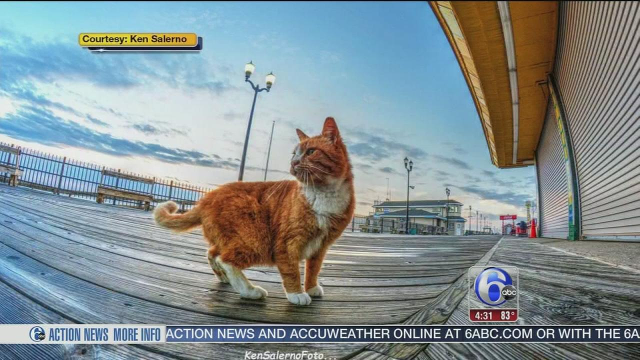 VIDEO: Jersey Shore town plan to control boardwalk cats