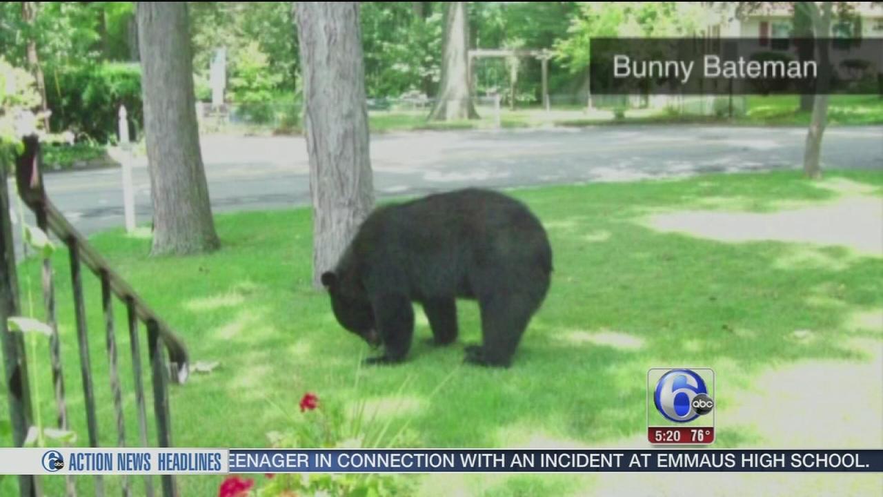 VIDEO: Bear breaks into NJ home