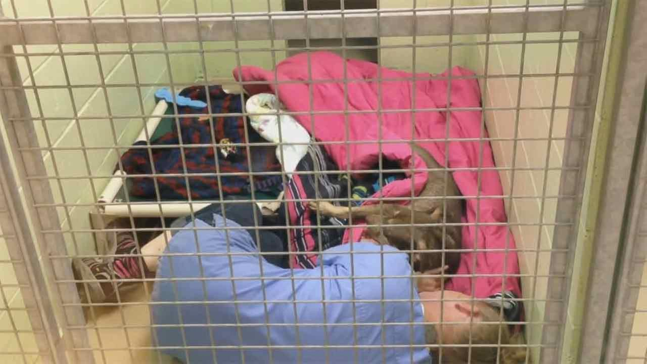 Animal shelter worker cuddles with abandoned dog after surgery