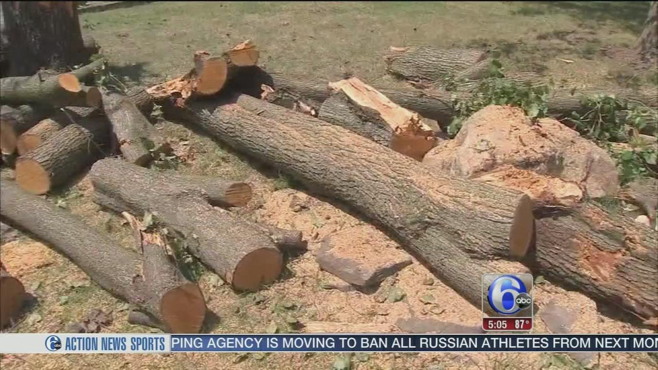 VIDEO: Storm cleanup in Delco