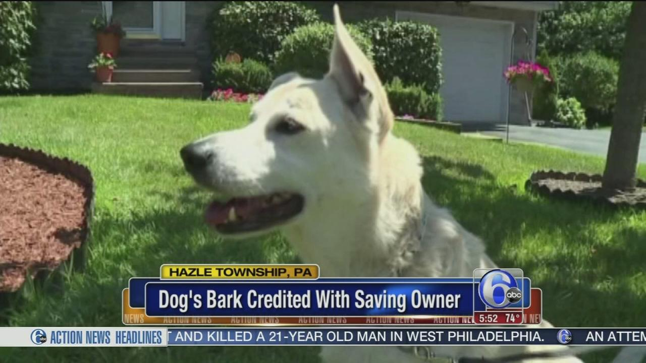 VIDEO: barking dog credited with saving owner