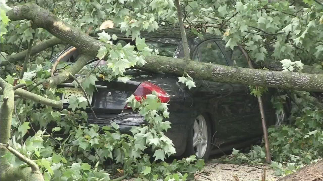 VIDEO: Magnolia rescue raw