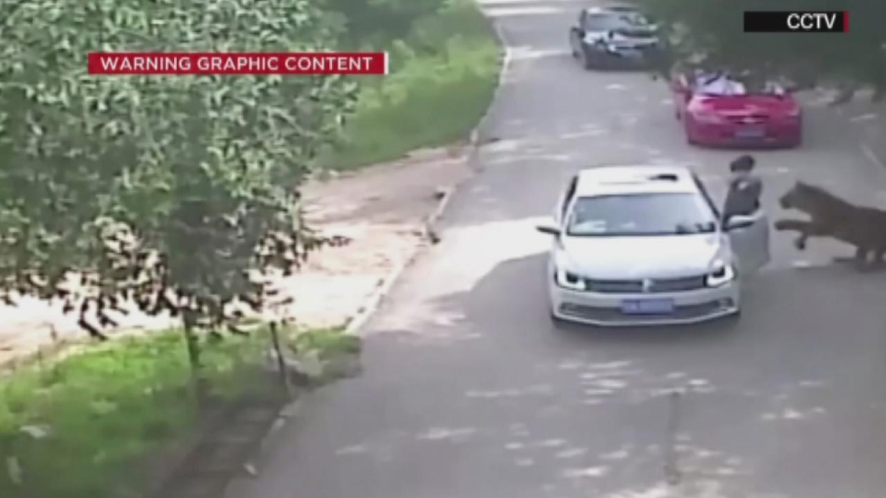 VIDEO: Tiger mauls woman to death at wildlife park
