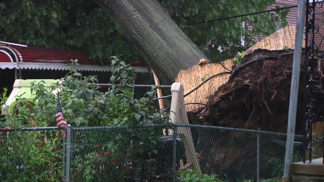 July 25, 2016:  A large tree fell onto a building along the 500 block of North Manoa Road in Havertown, Pa.