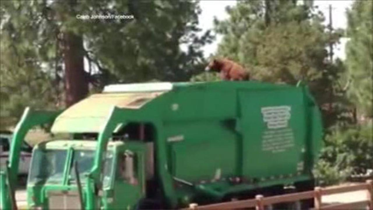 Camera captures bear on top of trash truck