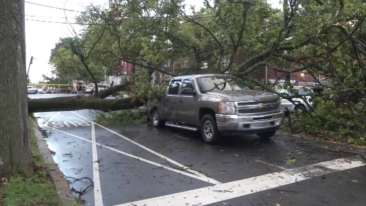 Pictured: A tree fell on a pickup truck during a storm on Saturday, August 6.