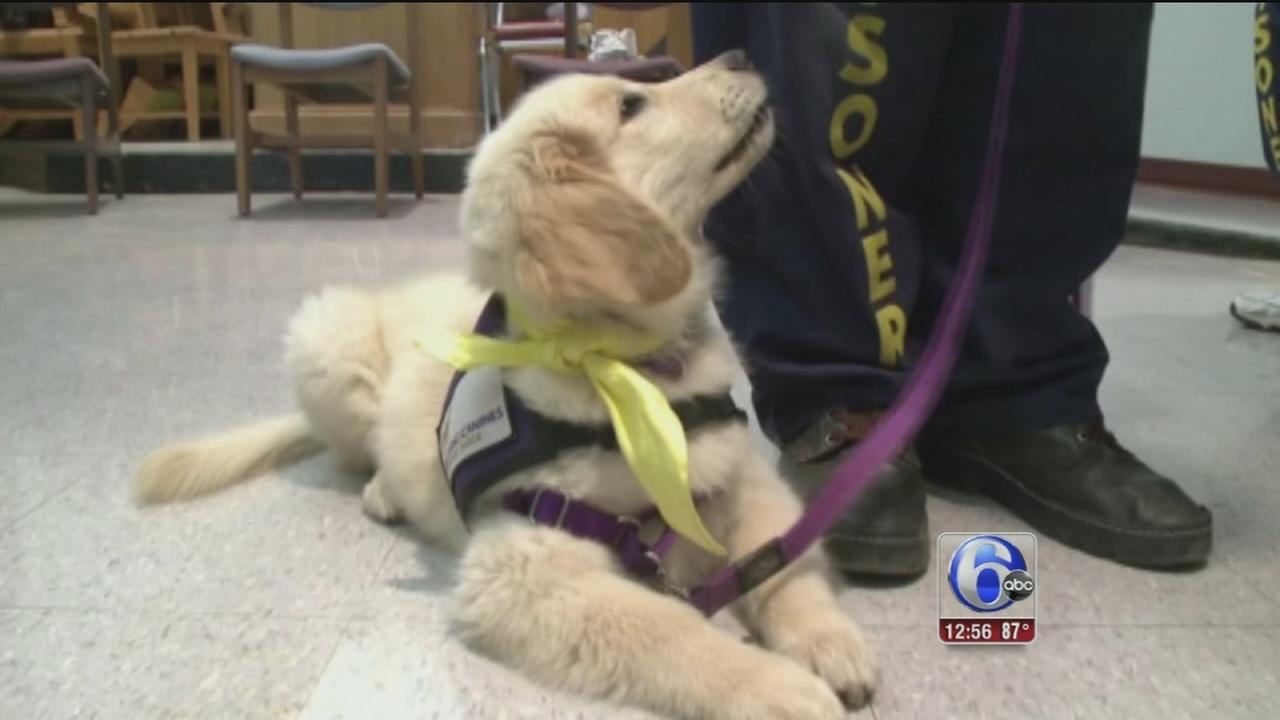 VIDEO: Calif. inmates train puppies to be service dogs