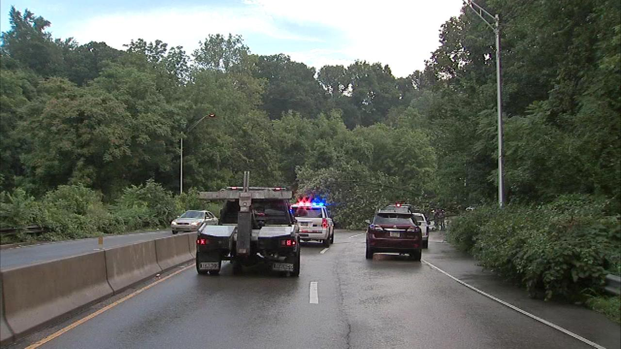 August 11, 2016: The tree came down in rainy conditions near Gypsy Lane before 8:30 a.m. in the northbound lanes.