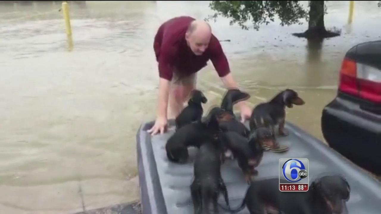 VIDEO: Puppy rescue
