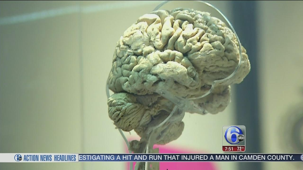 6abc Loves the Arts: Franklin Instittutes brain exhibit