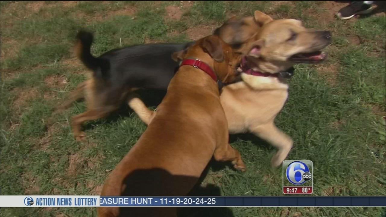 VIDEO: Shelter Me: Hemlock Edge Rescue