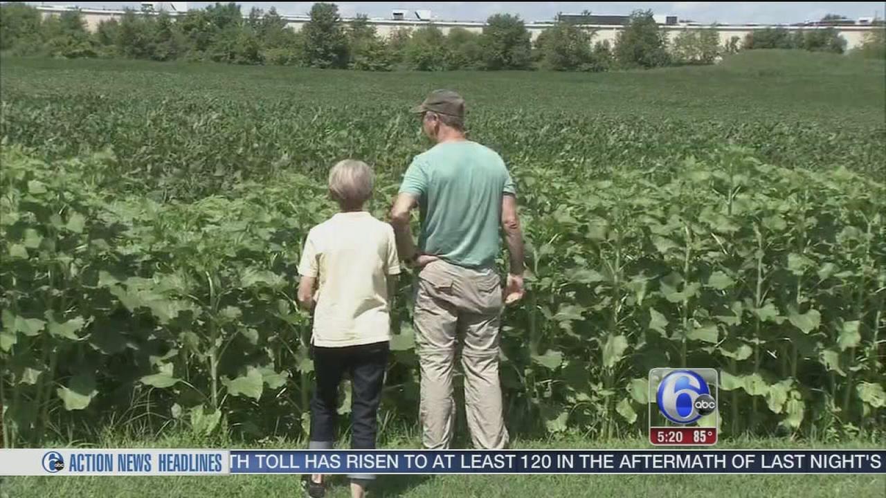 Local Produce Field Trip
