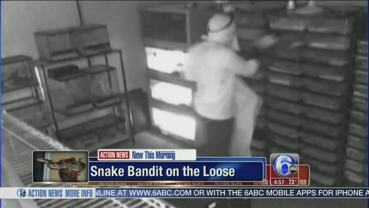 VIDEO: Bandit caught on camera stealing snakes