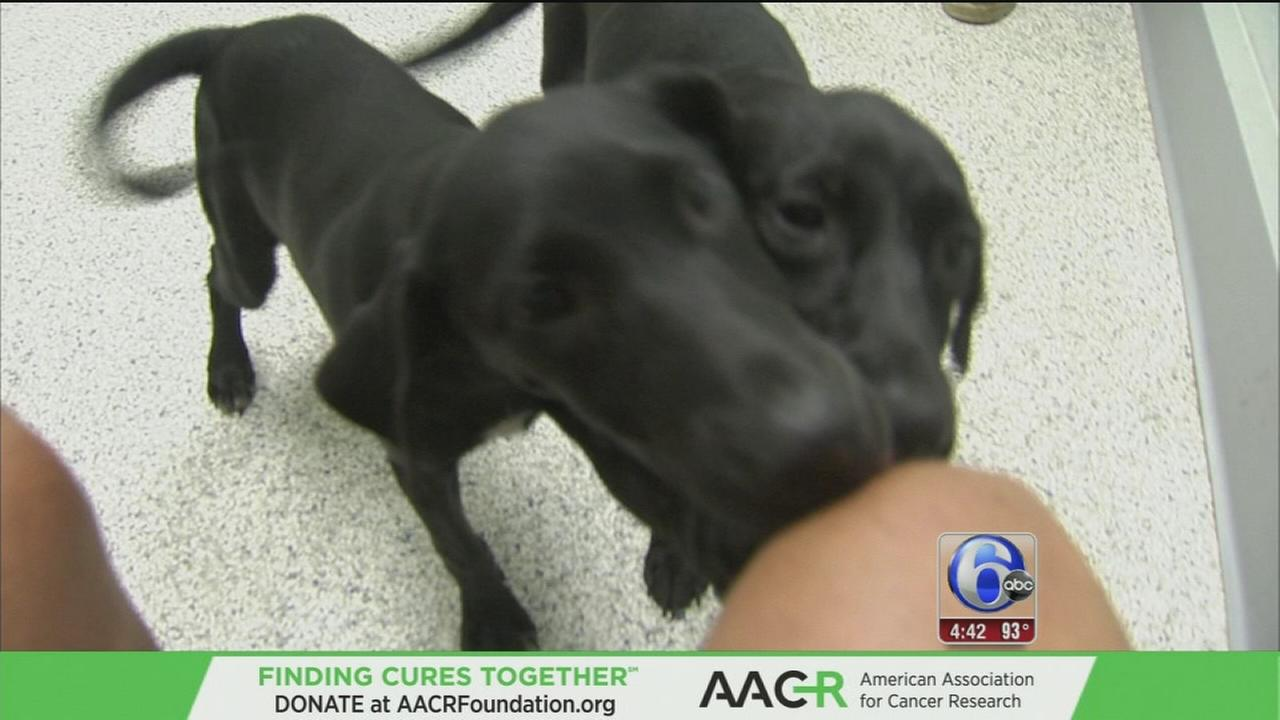 VIDEO: Flood dogs