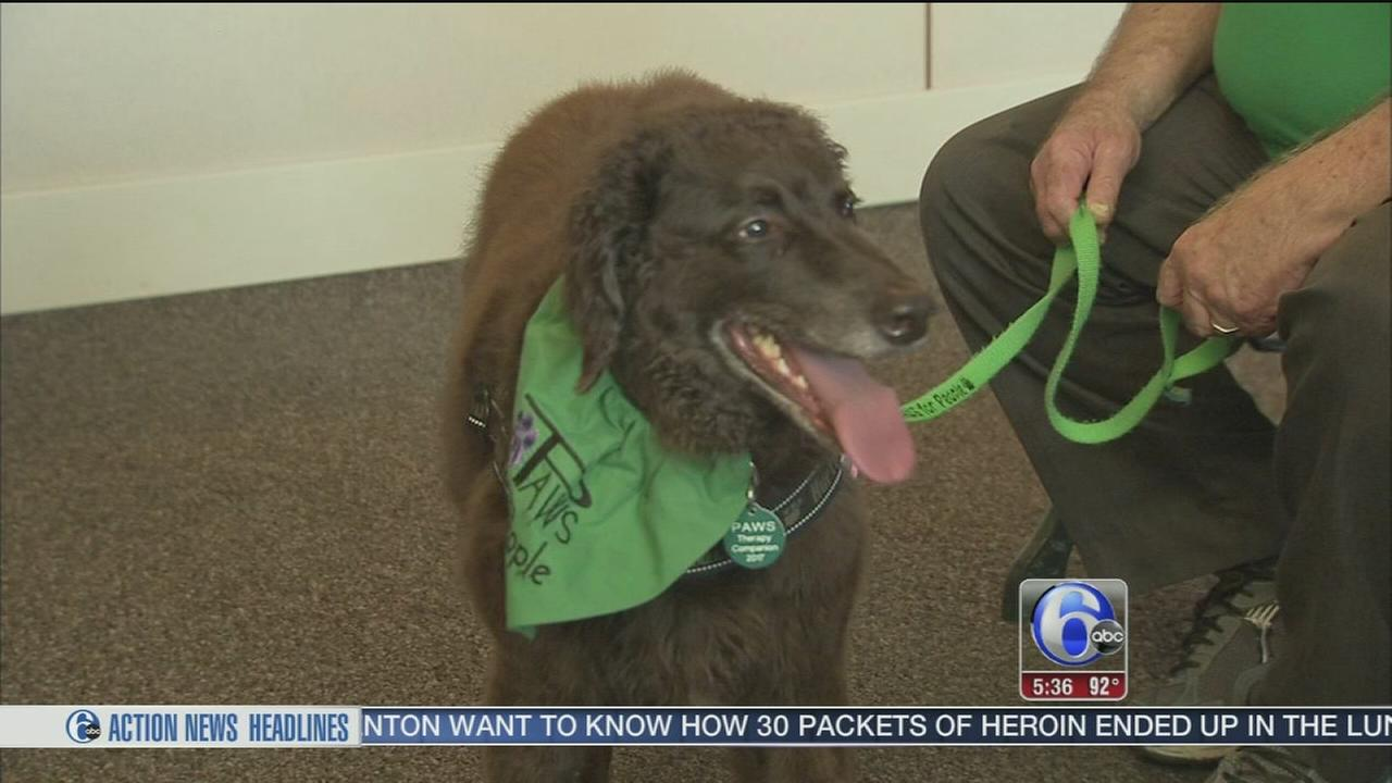 VIDEO: Paws for People