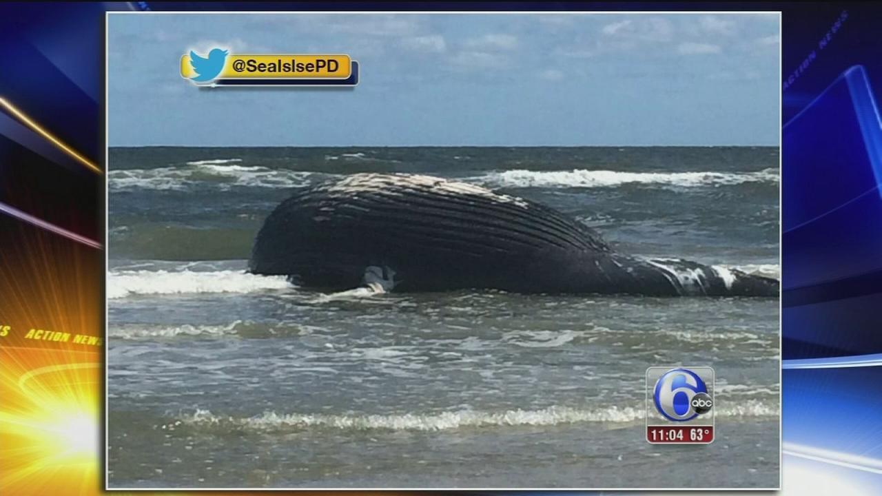 VIDEO: Dead whale