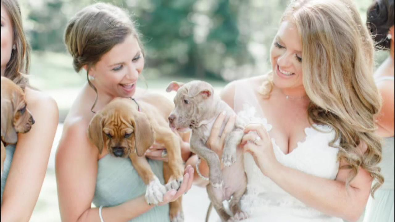PICTURES: Puppies replace flowers in Pa. bridal party