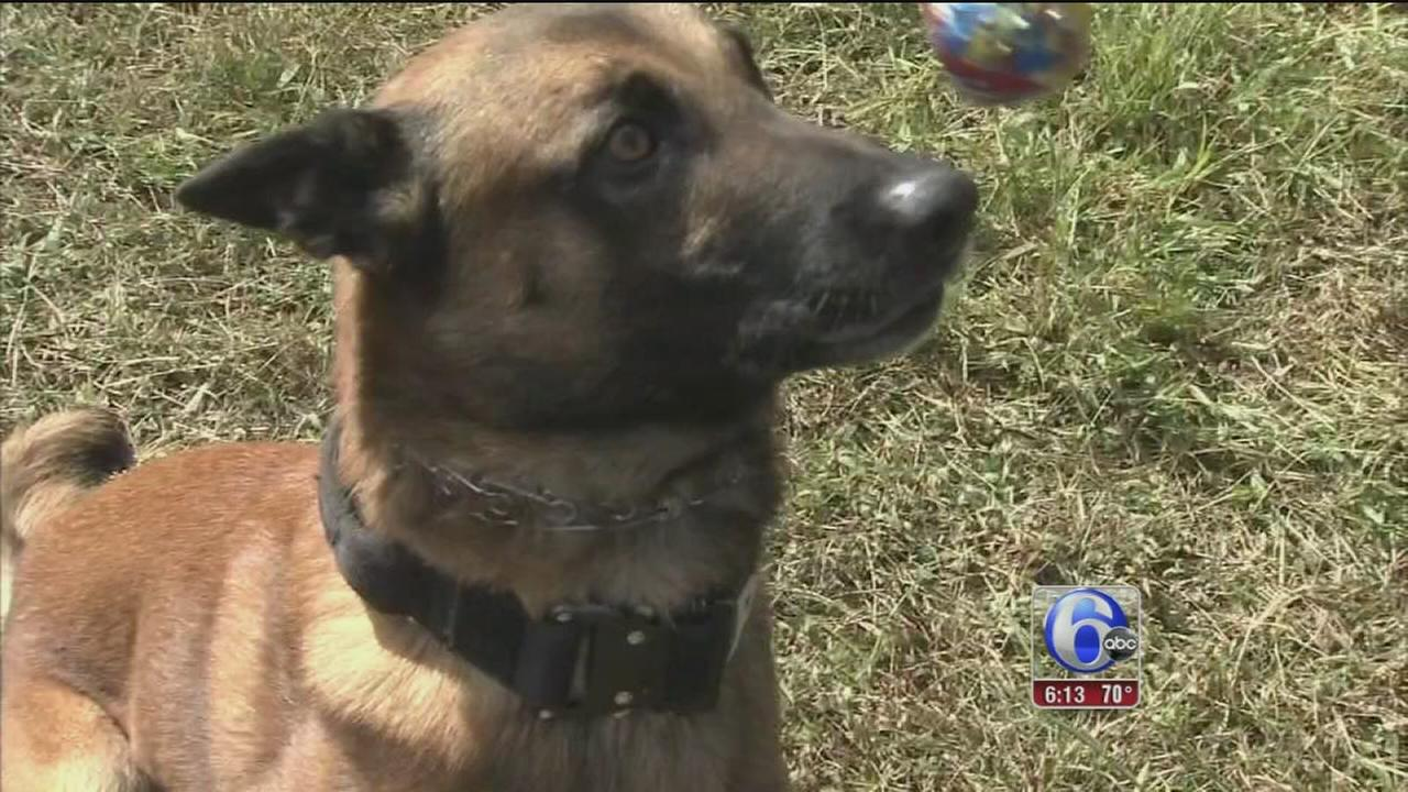 VIDEO: Canine Olympics: National Patrol Dog Trials in Gloucester Twp.