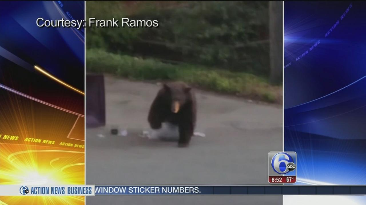 VIDEO: Bear charges after man recording garbage rummage