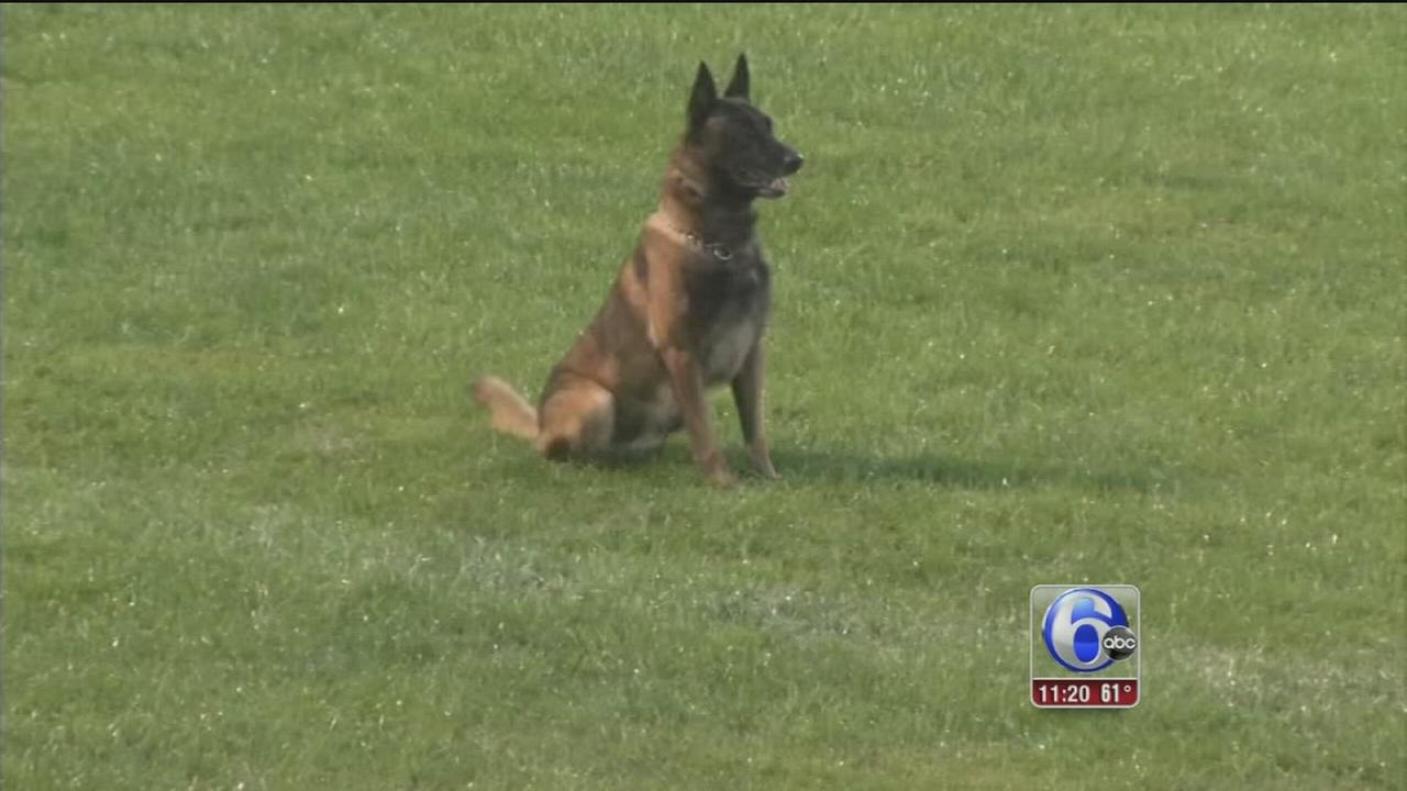 K-9 Dog Competition