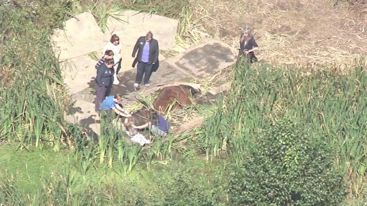 Chopper 6 was over the scene as rescuers worked to free a stuck horse in Thornbury Twp., Chester County.