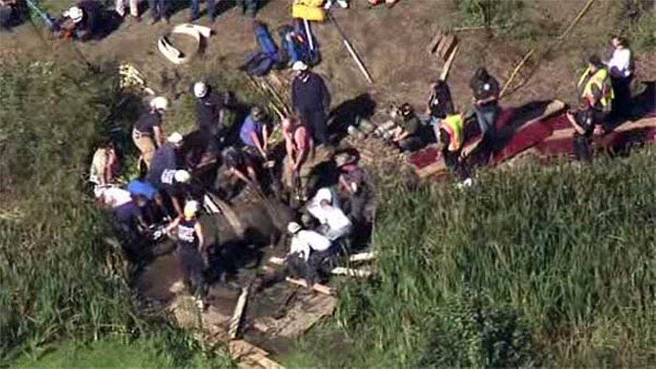 Images from Chopper 6 HD showed the animal, which Action News is told had been sedated, lying on its side and apparently breathing after a 3 1/2-hour rescue effort.