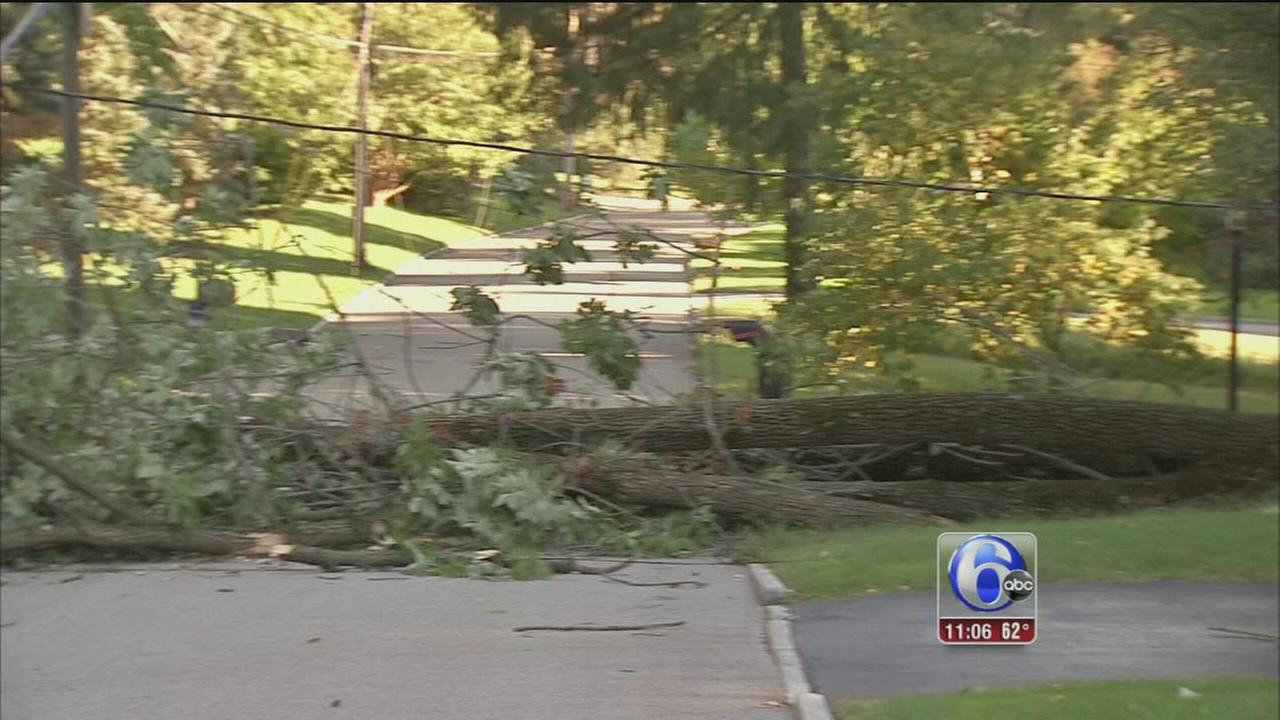 VIDEO: Downed trees