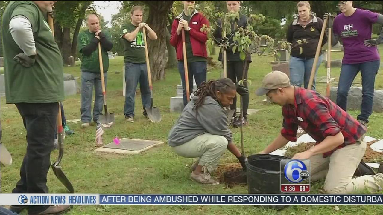 New trees beautify a cemetery