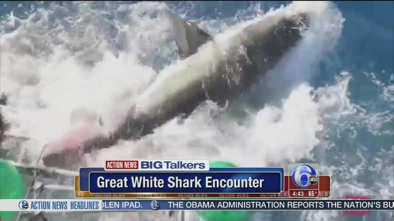 VIDEO: Great white shark breaches divers cage in terrifying encounter