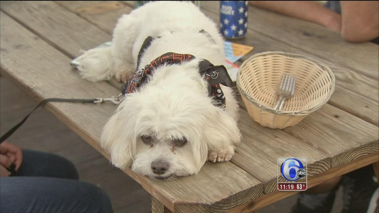 VIDEO: Yappy Hour