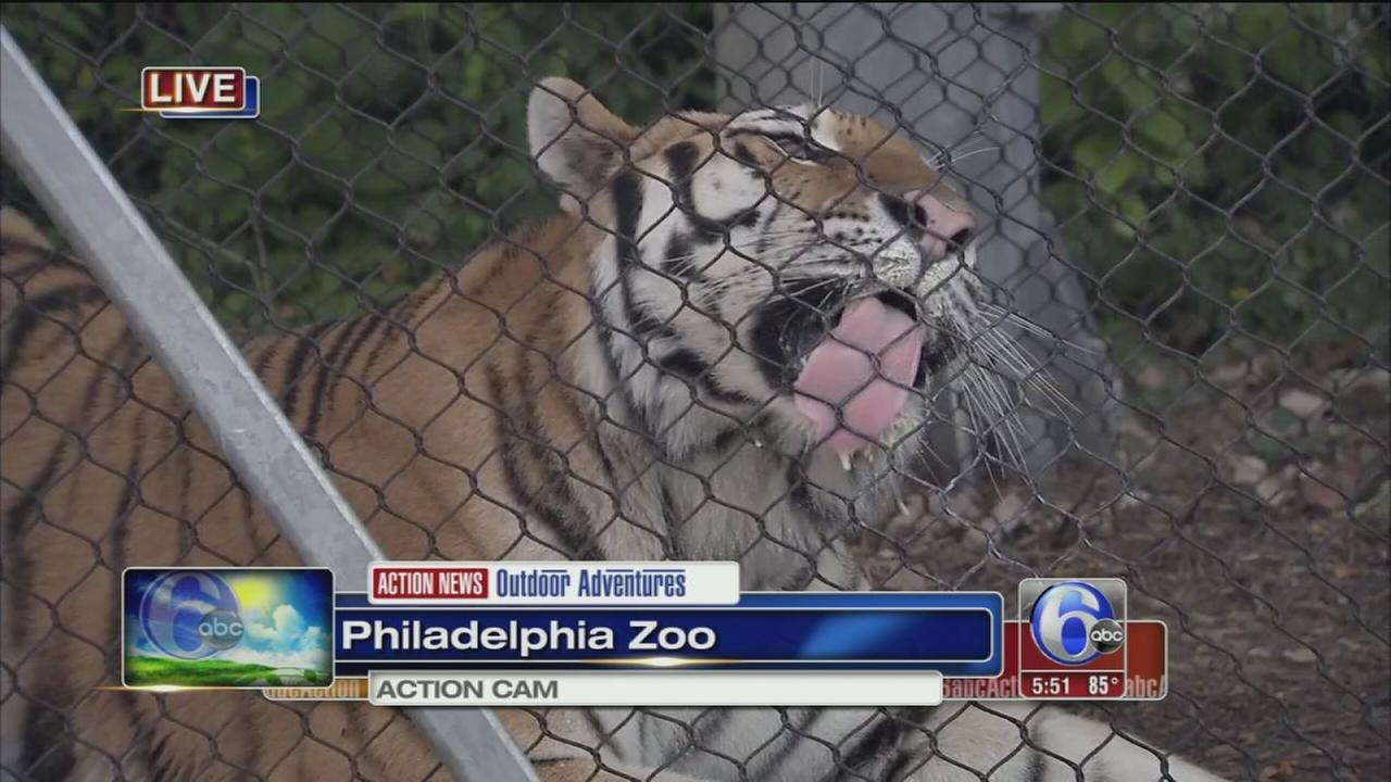 VIDEO: Zoo adventures