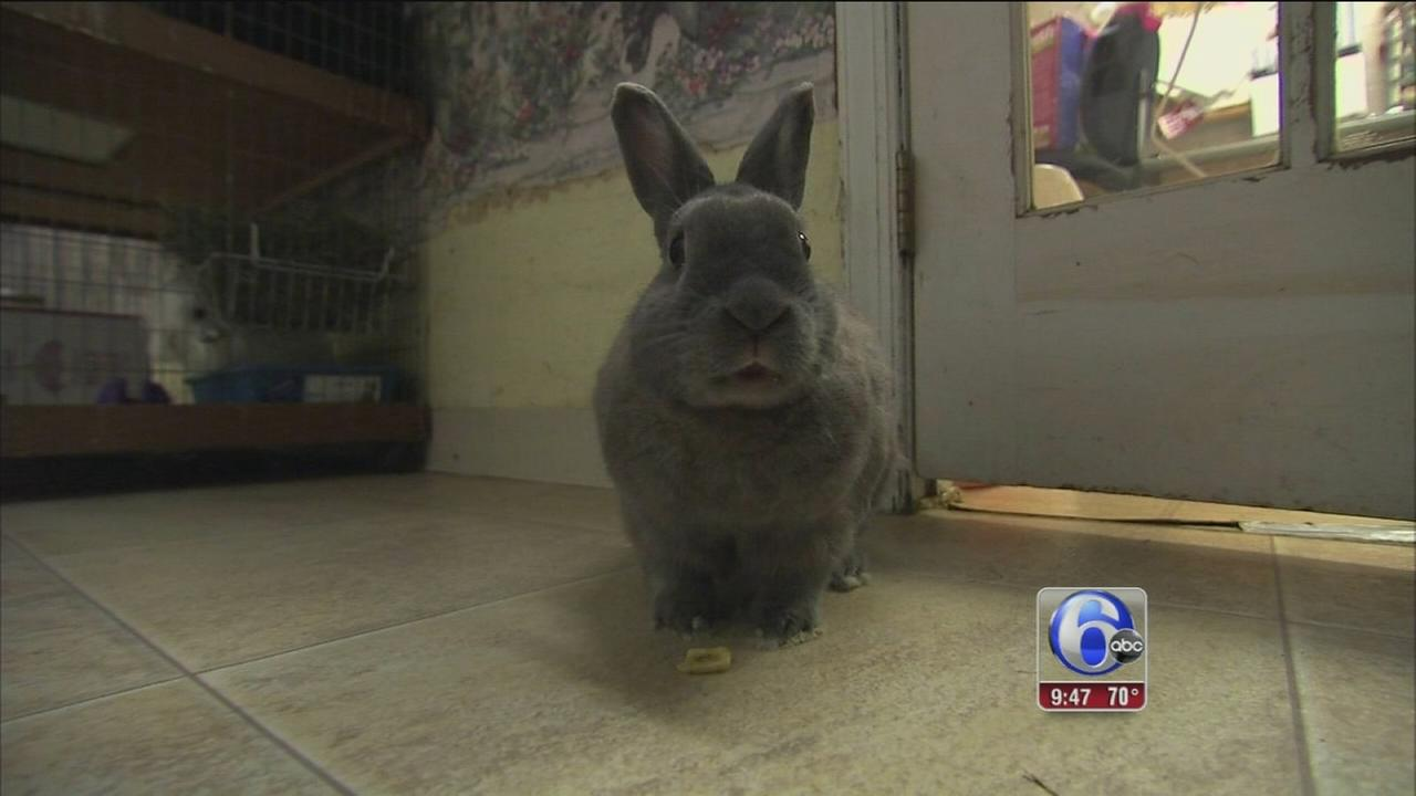 VIDEO: Shelter Me: House Rabbit Society