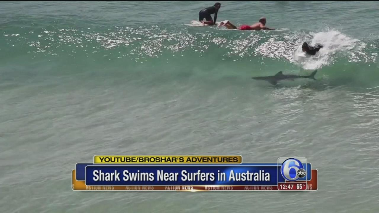 VIDEO: Surfer catches wave right over shark in Australia
